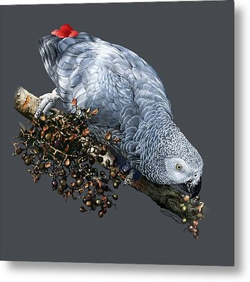 African Grey Parrot A Metal Print by Owen Bell
