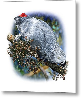 African Grey Parrot A1 Metal Print by Owen Bell