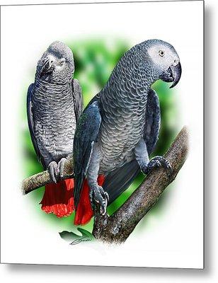 African Grey Parrots A Metal Print by Owen Bell