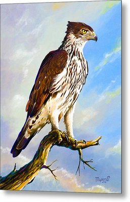 African Hawk Eagle Metal Print by Anthony Mwangi