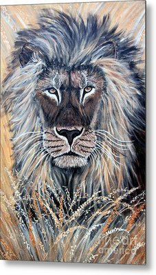African Lion Metal Print by Nick Gustafson