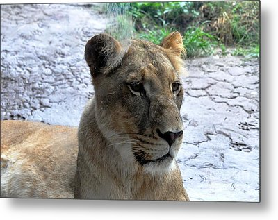 Metal Print featuring the photograph African Queen by John Black