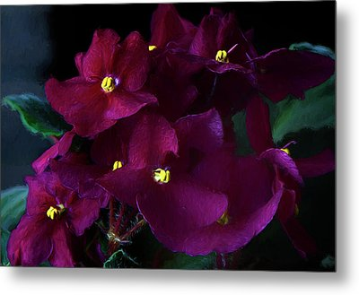Metal Print featuring the photograph African Violets Photo Art by Sharon Talson