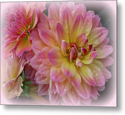 After The Rain - Dahlias Metal Print by Dora Sofia Caputo Photographic Art and Design