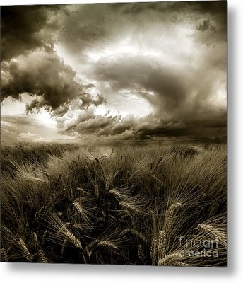 Metal Print featuring the photograph After The Storm  by Franziskus Pfleghart