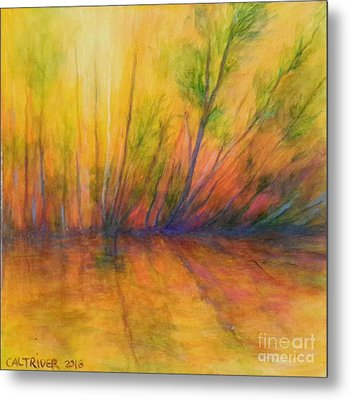 Afternoon Glow  Metal Print by Alison Caltrider