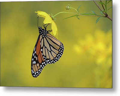Metal Print featuring the photograph Afternoon Snack by Ann Bridges