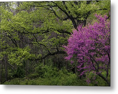 Metal Print featuring the photograph Afton Virginia Spring Red Bud by Kevin Blackburn