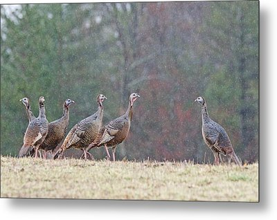 Against The Crowd 1287 Metal Print by Michael Peychich