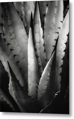 Metal Print featuring the photograph Agave And Patterns by Eduard Moldoveanu