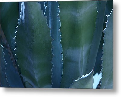 Agave Metal Print by Jerry Cave