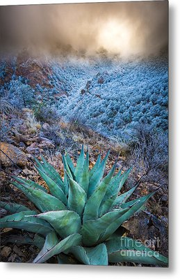 Agave Winter Metal Print by Inge Johnsson