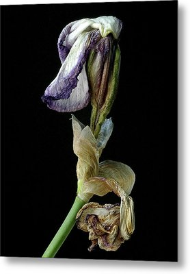 Metal Print featuring the photograph Aging Iris by Art Shimamura