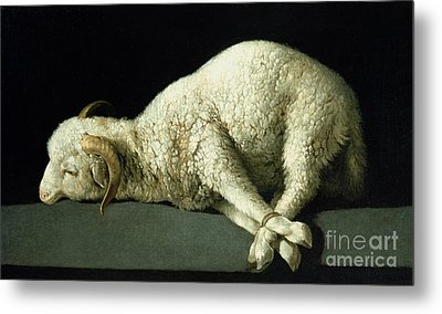 Agnus Dei Metal Print by Francisco de Zurbaran