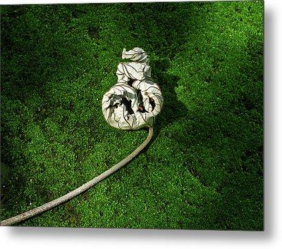 Aguished Leaf Metal Print by Douglas Barnett
