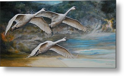 Ahead Of The Storm - Trumpeter Swans On The Move Metal Print by Anton Oreshkin