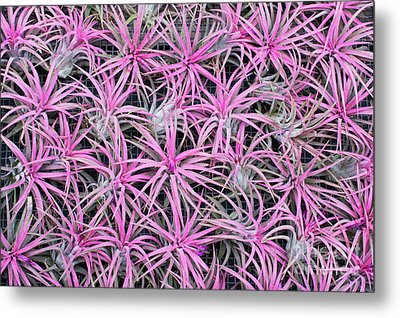 Airplants Metal Print by Tim Gainey