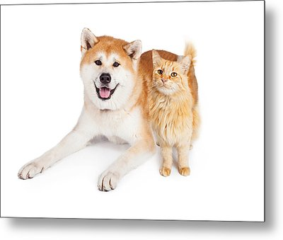 Akita Dog And Tabby Cat Over White Background Metal Print