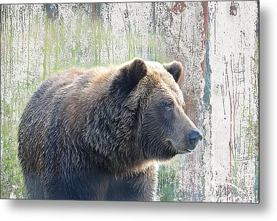 Metal Print featuring the photograph Alaska Brown Bear  by Dyle   Warren
