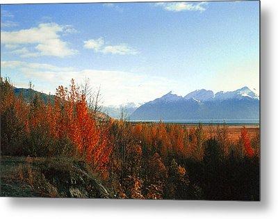 Alaskan Fall Metal Print by Brigid Nelson