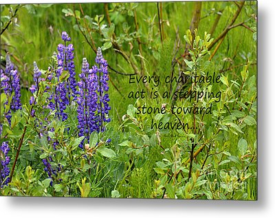 Metal Print featuring the photograph Alaskan Lupine Heaven by Diane E Berry