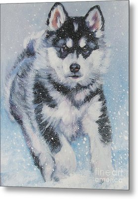 alaskan Malamute pup in snow Metal Print by Lee Ann Shepard