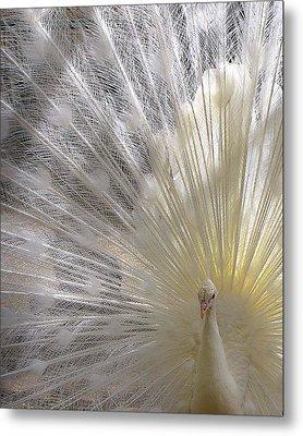Pure White Peacock Metal Print