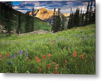 Albion Basin Wildflowers Metal Print by Utah Images