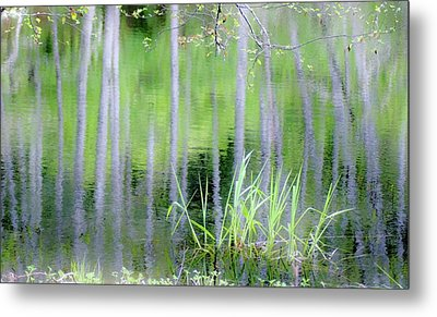 Alder Reflections Metal Print by Sheila Ping