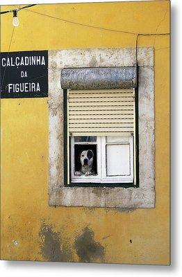 Alfama Dog In Window - Calcadinha Da Figueira  Metal Print