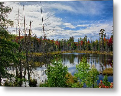 Algonquin In Autumn Metal Print by Irwin Seidman