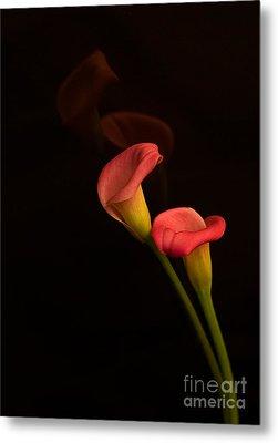 Alison's Flower Metal Print by Robert Pilkington