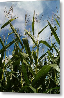 All About Corn Metal Print