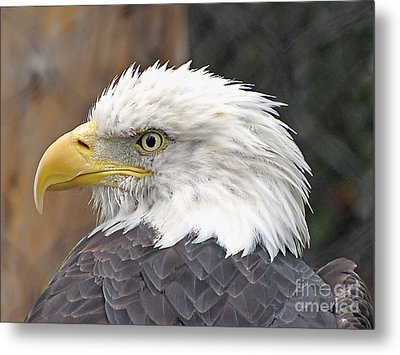 All American Bird Metal Print by Martha Ayotte