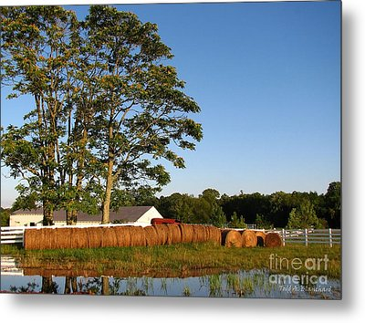 All In A Row Metal Print by Todd A Blanchard