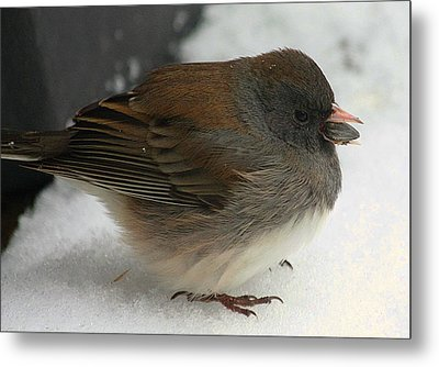 All Puffed Up Metal Print