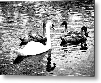 Metal Print featuring the photograph All You Need Is Love  by Fine Art By Andrew David