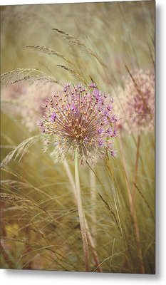 Allium Purple Sensation Metal Print by Jacky Parker Photography