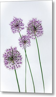 Alliums Standing Tall Metal Print
