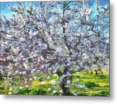 Almond Blossom Metal Print by Tracey Harrington-Simpson