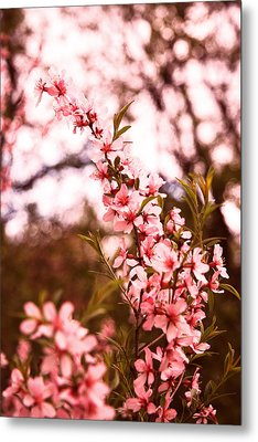 Almonds1 Metal Print