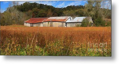 Almost Autumn Metal Print by Benanne Stiens