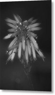 Aloe Bloosom Metal Print by Alexander Rozinov