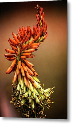 Metal Print featuring the photograph Aloe Vera Twist  by Saija Lehtonen