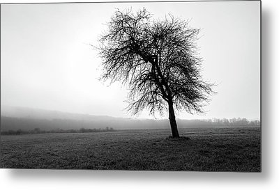 Metal Print featuring the photograph Alone In A Field by Andrew Pacheco