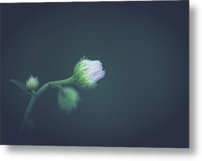 Metal Print featuring the photograph Alone In Dreams by Shane Holsclaw