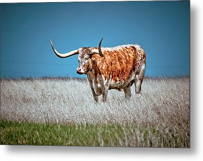 Metal Print featuring the photograph Alone On The Trail by Linda Unger