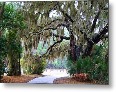 Metal Print featuring the photograph Along The Path by Kathryn Meyer