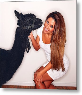 Alpaca Emily And Breanna Metal Print by TC Morgan