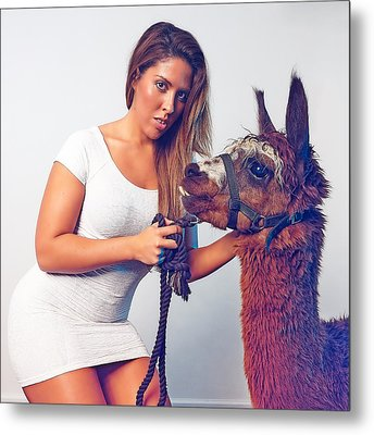 Alpaca Mr. Tex And Breanna Metal Print